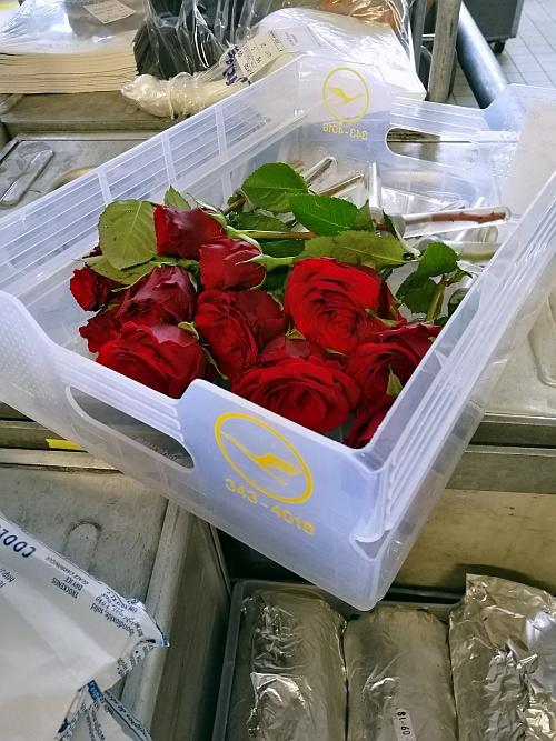 Rózsák az első osztályra