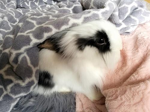 Bolyhoska és az ő aktuális takarói