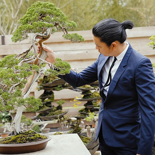 Asahi-bonsai